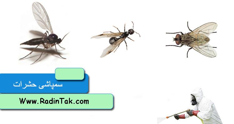 سمپاشی حشرات